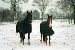Paard_winter_oscar_Breezer_deken