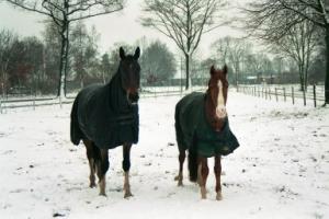 Paard_winter_oscar_Breezer_deken